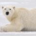 Is silica gel polar?